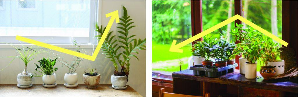 観葉植物の置き方