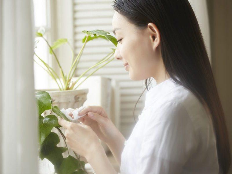 マンションのお部屋で育てやすい観葉植物とは?レイアウトのコツもご紹介します。