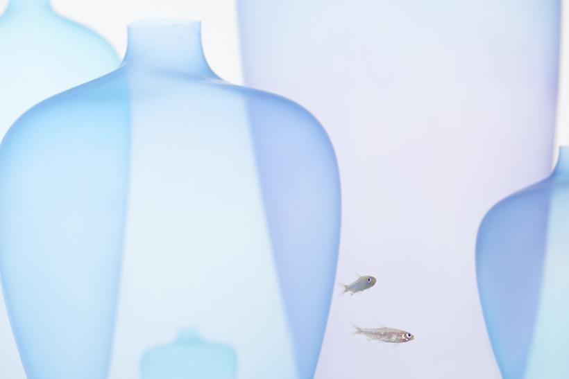 jellyfish_vase17_akihiro_yoshida