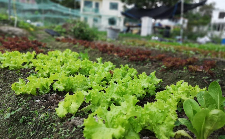 細味梅窩 由農田到餐桌(24.2.2019)—環保基金「梅窩 Farm to Table 農業社區」計劃