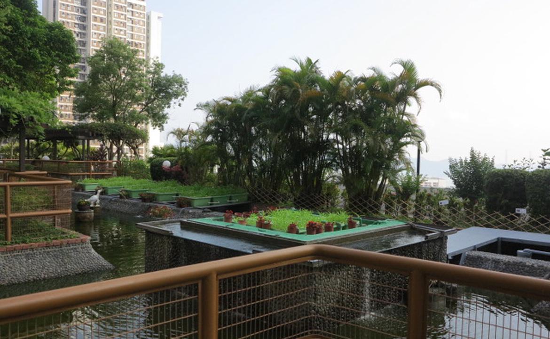 置富花園魚菜共生系統