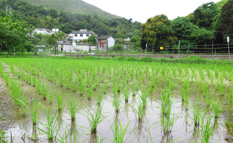 農、村、野、人 - 荔枝窩自然農務體驗