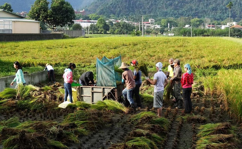 以「穀笠」之名,行「鼓勵」之實 - 分享穀笠合作社在台灣埔里操作的實踐經驗