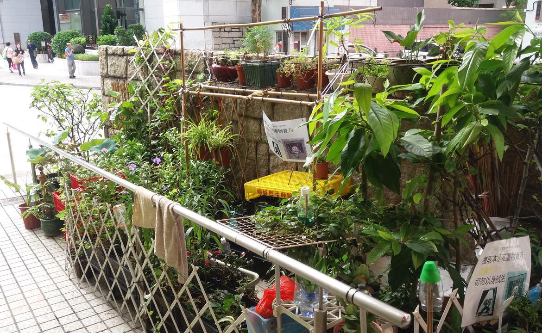 滙豐仁愛堂「仁間有愛」社區支援中心 環保社區小花圃