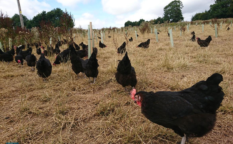 訪英記 — 走走走地雞蛋農場