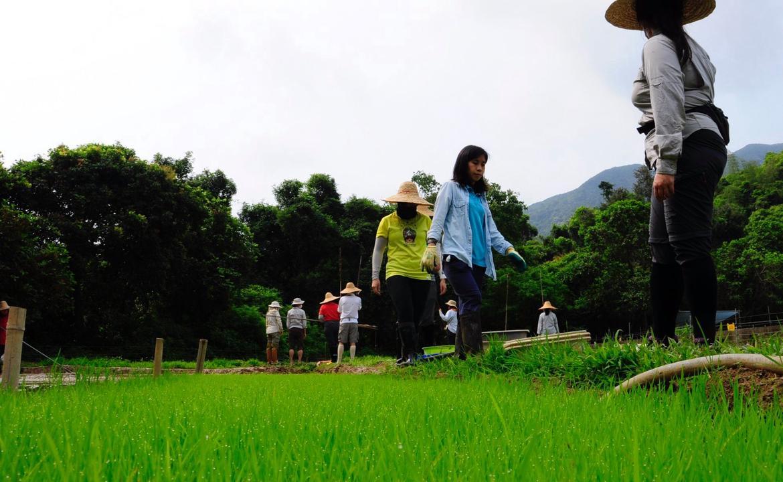 荔枝窩種米小隊
