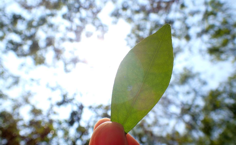 《星人自然學堂:聽!葉子在唱歌! 大自然葉笛課程》