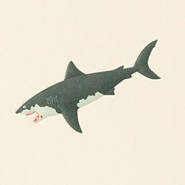 No.700 サメ の名刺