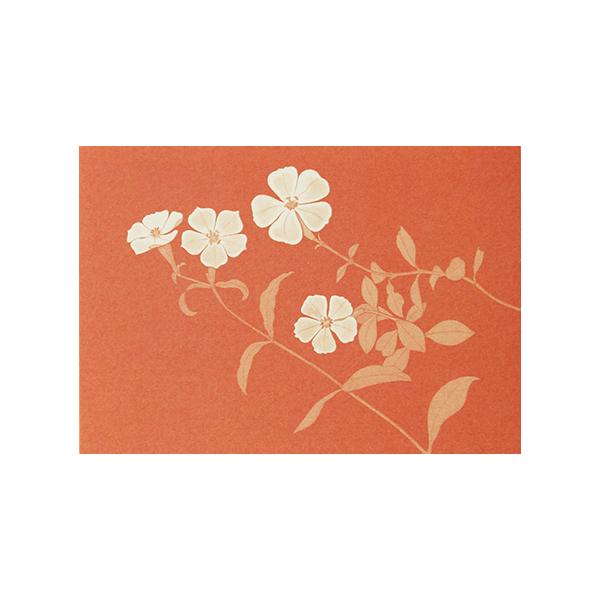 No.631野の花 フシグロセンノウ Pカード