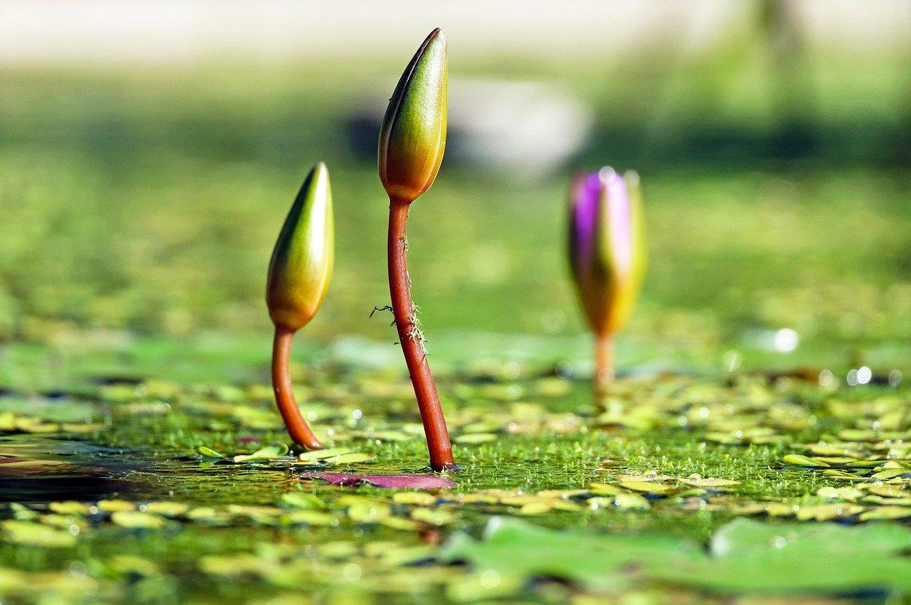 成功の種子