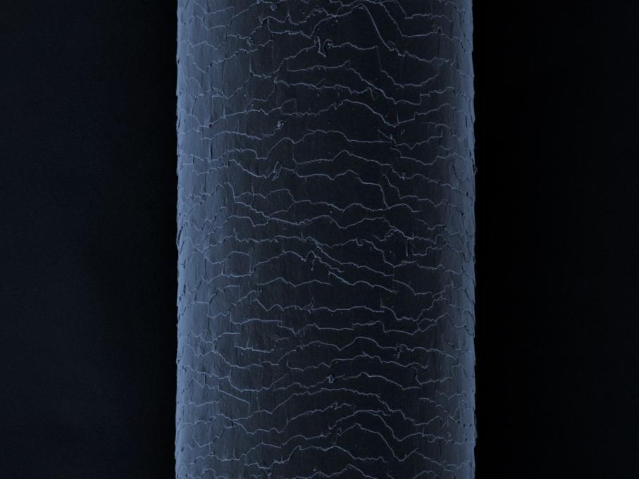 電子顕微鏡の画像でキューティクルをチェック!のイメージ