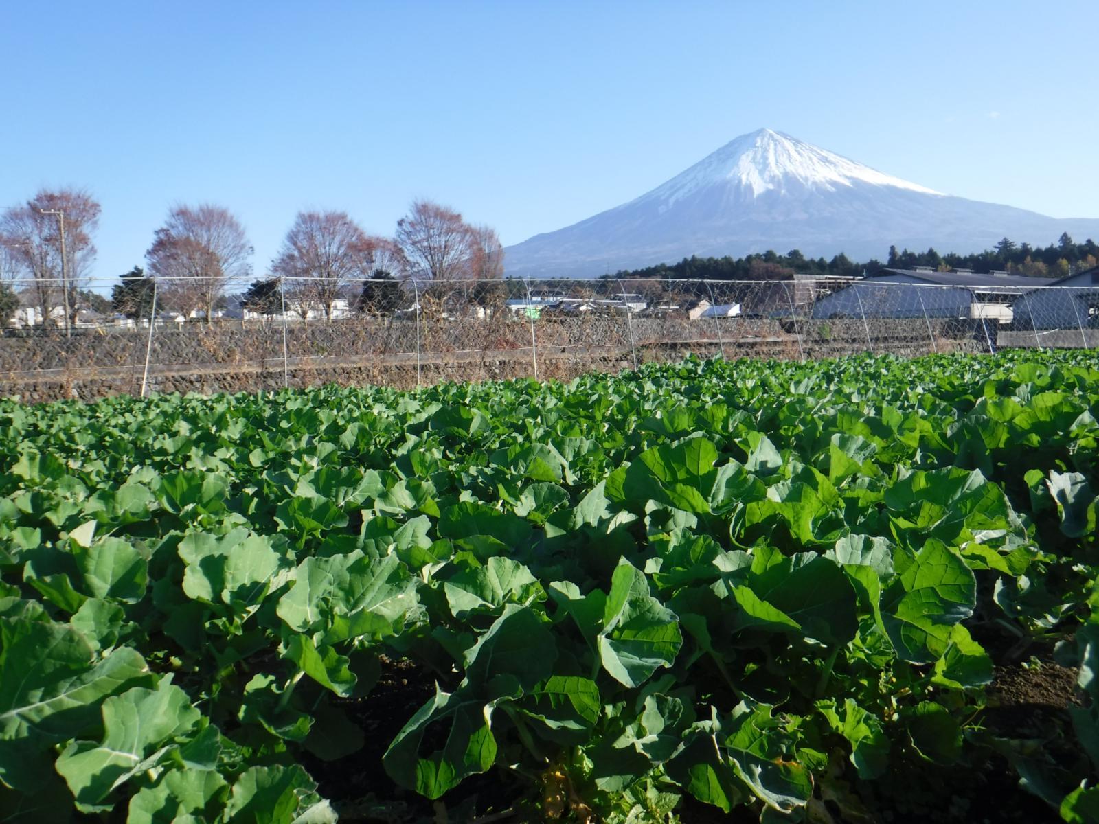 富士宮契約農家!のイメージ
