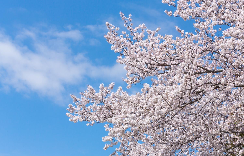 春のお花見スポット【西部エリア】