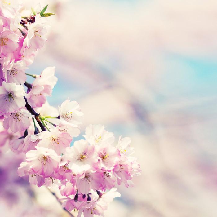 春のお花見スポット【中部・東部エリア】