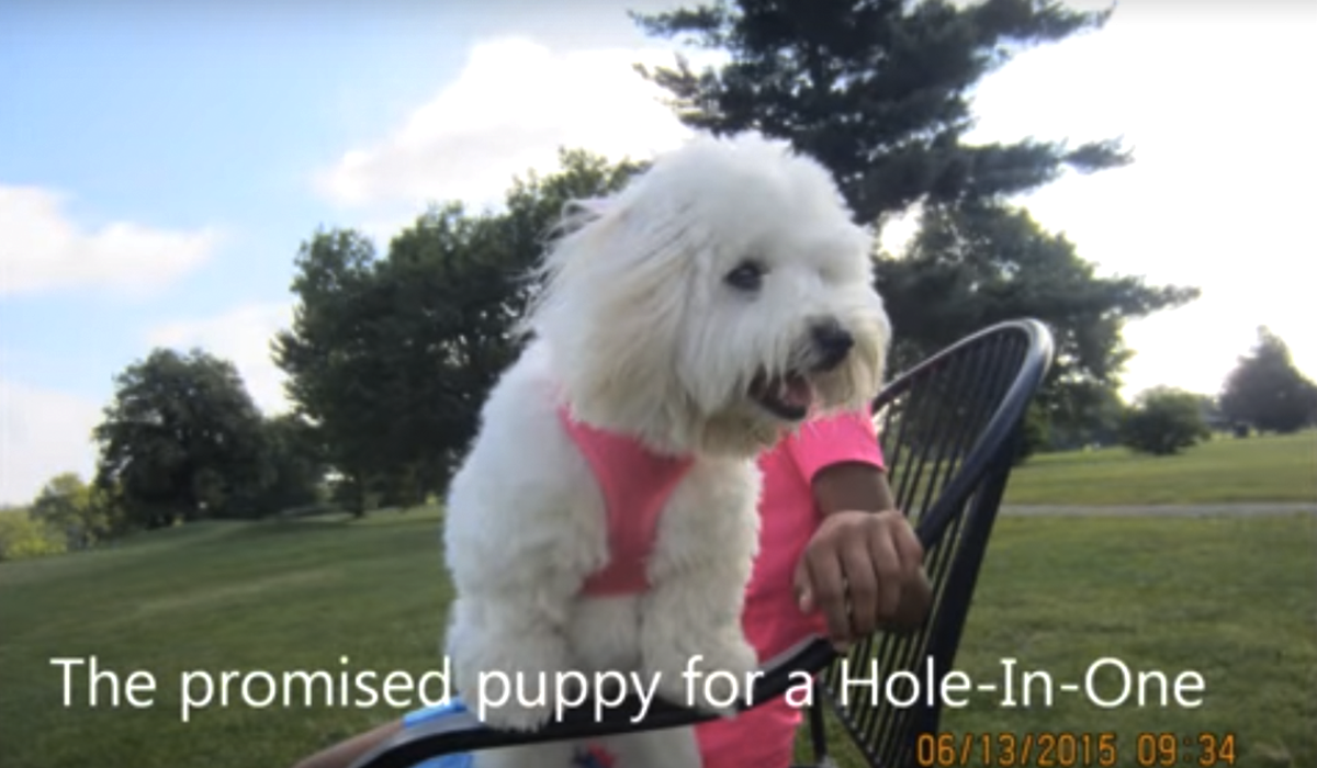 Hole in one puppy2