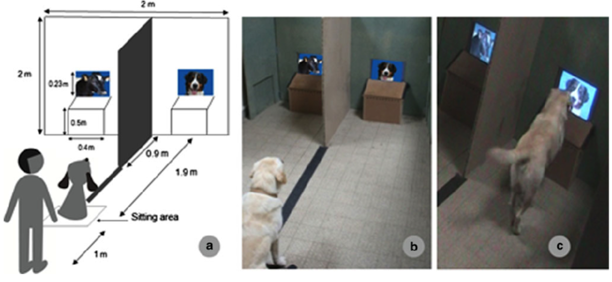 1294 Fig 3 Apparatus a b The dog sits in front of the experimenter on a line between the 2