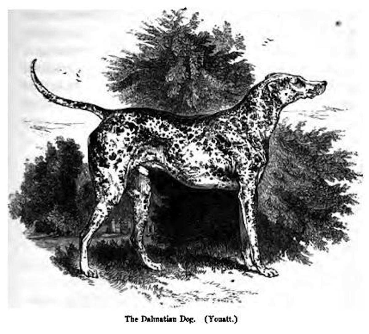 1476 1 thewoof