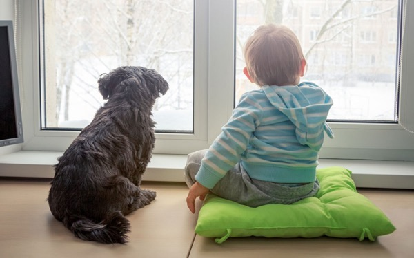 Dog and kid looking out