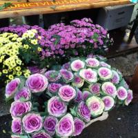 初心者にやさしいガーデニングのキホン(4) 花の苗の上手な選び方!の画像