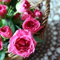 今年は何の花をプレゼントする? 母の日に贈りたい花&植物7選!の画像