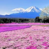 ゴールデンウィークは癒しを求めて花畑へ!一度は訪れたい花畑スポット7選<関東近郊編>の画像