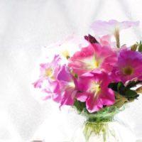 初夏から秋にかけて長く花が楽しめる、初心者にぴったりの「ペチュニア」。の画像