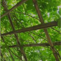 今年の夏はグリーンで爽やかな涼を。グリーンカーテンにおすすめの植物5選の画像