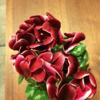 シクラメンの花の魅力をご紹介の画像