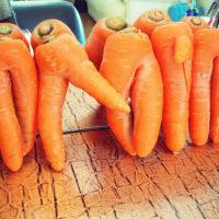セクシー人参から、赤ちゃん大根まで! へんてこなカタチの野菜が大集合の画像