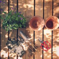 ガーデンツールを使ってスイセンを育てよう!の画像