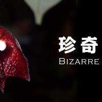 えっ!?これが植物!?珍奇な形で話題のビザールプランツを集めたよっ!の画像