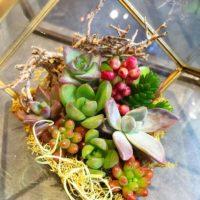 新しいインテリア!テラリウムで植物を育てようの画像