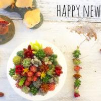 一年のはじまりも多肉から。新年らしい「多肉飾り」が大集合!の画像