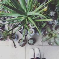 多肉・サボテン・観葉植物etc.  参考にしたい屋内グリーンディスプレイ♡の画像