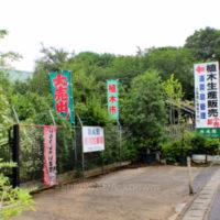 植木のまち 埼玉県「安行」めぐり(5)  ガーデニングに関することなら  なんでもそろう安行。  生産者さん直営店では、  お買い得品もたくさん!の画像