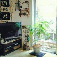 観葉植物の中でも人気なエバーフレッシュの画像