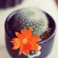花を咲かせる観葉植物の画像