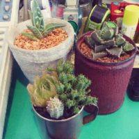 オフィス用観葉植物にはこれがオススメ!の画像