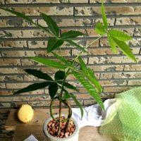 あなたを癒やすシンボルツリーとしての観葉植物の画像