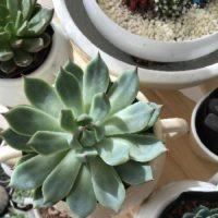 観葉植物の敵はクーラー?育てる前に押さえておきたいポイントの画像