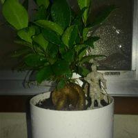 リビングに置くと運気の上がる観葉植物の画像