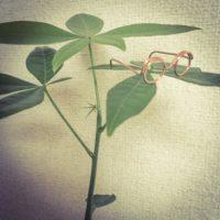 プレゼントに観葉植物を渡す際の選択肢の画像