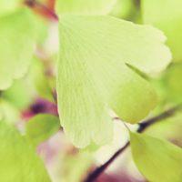 キッチンにも緑を!おすすめの観葉植物3選の画像