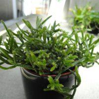 インテリアに最適!垂れる観葉植物をご紹介の画像