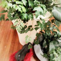さまざまな種類の観葉植物の画像をチェック!の画像