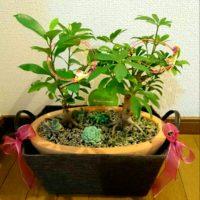 配達が無料のところも!おすすめの観葉植物通販サイトの画像