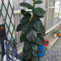 大型の観葉植物を買うならココ!おすすめの通販サイトの画像