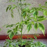 テーブルに置けるサイズの可愛い観葉植物の画像