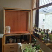 ミニ温室で観葉植物を楽しもうの画像