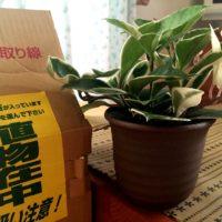 通販で人気!お洒落で安い観葉植物の画像